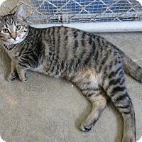 Adopt A Pet :: Tamra - Geneseo, IL