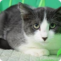 Adopt A Pet :: Jasper - Bradenton, FL