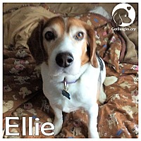 Adopt A Pet :: Ellie - Pittsburgh, PA