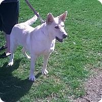Adopt A Pet :: Elsa - Winchester, VA