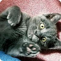 Adopt A Pet :: Sarah - Palmdale, CA