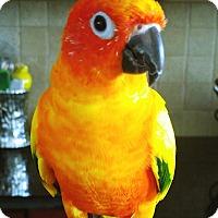 Adopt A Pet :: Durado - Tampa, FL