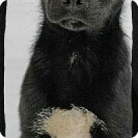 Adopt A Pet :: Blueberry - Old Saybrook, CT