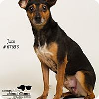 Adopt A Pet :: Jace - Baton Rouge, LA