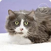 Adopt A Pet :: Ozzy - Apache Junction, AZ
