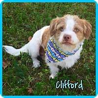 Adopt A Pet :: Clifford - Jasper, IN