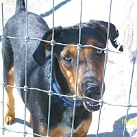 Adopt A Pet :: Jimmy - Mexia, TX