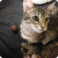 Adopt A Pet :: Minnie - San Ramon, CA