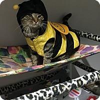 Adopt A Pet :: Felix - Loogootee, IN