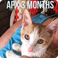 Adopt A Pet :: SLINKY - BONES - Glendale, AZ