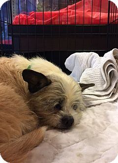 Boston Terrier Mix Dog for adoption in Powder Springs, Georgia - Massy