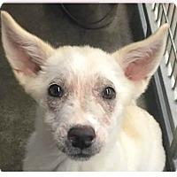 Adopt A Pet :: Sydney - Springdale, AR