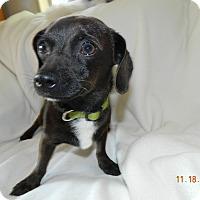 Adopt A Pet :: Tango - Umatilla, FL