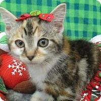 Adopt A Pet :: Delilah - Lloydminster, AB