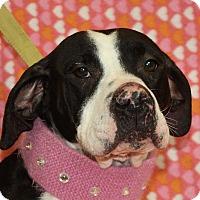 Adopt A Pet :: Hanna - Jackson, MI