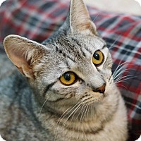 Adopt A Pet :: Brewster - Lombard, IL