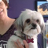 Adopt A Pet :: Eliza - Thousand Oaks, CA