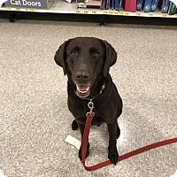 Adopt A Pet :: Quinnie - Darien, GA