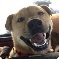 Adopt A Pet :: Rubix - Southbury, CT