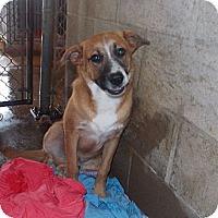 Adopt A Pet :: Blitz - Linden, TN