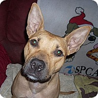 Adopt A Pet :: SARAH - Hollywood, FL