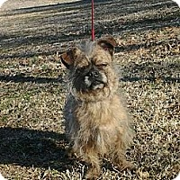 Adopt A Pet :: Toto - Hollis, ME