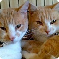 Adopt A Pet :: Scooter N Chance - San Luis Obispo, CA