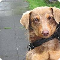 Adopt A Pet :: AMES - Portland, OR