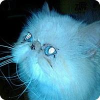 Adopt A Pet :: Benji - Columbus, OH