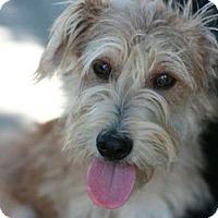 Adopt A Pet :: Clinton - Canoga Park, CA