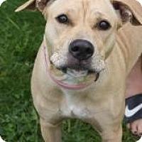 Adopt A Pet :: Bailey - Dover, OH