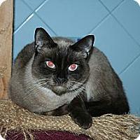 Adopt A Pet :: Chardonnay - Santa Rosa, CA