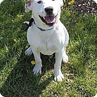 Adopt A Pet :: Scooby - Laingsburg, MI