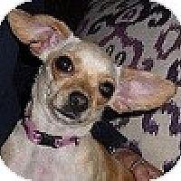 Adopt A Pet :: Peanut (Baby) - Hamilton, ON