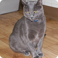 Adopt A Pet :: Gracie - Dover, OH
