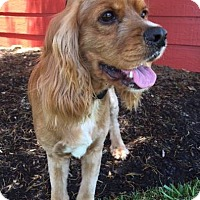 Adopt A Pet :: Sundance - Sugarland, TX