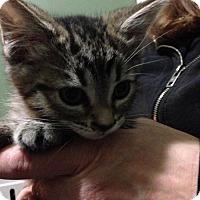 Adopt A Pet :: Oskar - Caistor Centre, ON