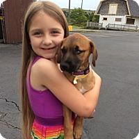 Adopt A Pet :: Kasey - Homer, NY