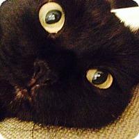 Adopt A Pet :: FiFi - Novato, CA