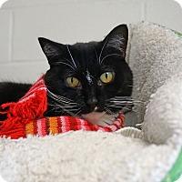 Adopt A Pet :: Tiara 'Sparkles' - Mt Vernon, NY