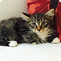 Adopt A Pet :: Delli - Addison, IL