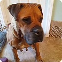Adopt A Pet :: Gia - Virginia Beach, VA