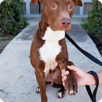 Adopt A Pet :: Bladez - San Diego, CA