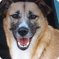 Adopt A Pet :: MARGIE VON MORGEN - Los Angeles, CA