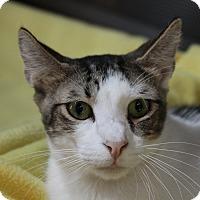 Adopt A Pet :: Spice - Sarasota, FL