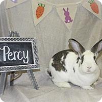 Adopt A Pet :: Percy - Holbrook, NY