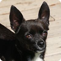 Adopt A Pet :: Tate - Edmonton, AB