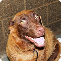 Adopt A Pet :: Daisy *foster needed!* - Chicago, IL