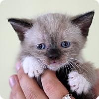 Adopt A Pet :: Sammy - Dalton, GA