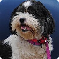 Adopt A Pet :: Slim - Philadelphia, PA